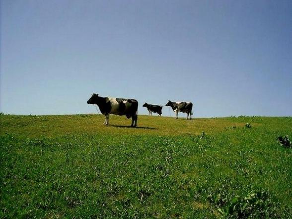 Przyroda i krajobraz