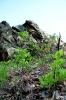 Diabelski Kamień - zdjęcie z maja 2012r.